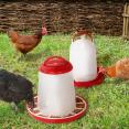 Abreuvoir + mangeoire pour poules