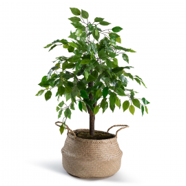 Ficus artificiel 90 cm avec pot