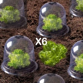 Cloche à salades X6 serre de protection pour plants