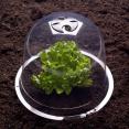 Cloche à salades X6 serre de protection pour plants
