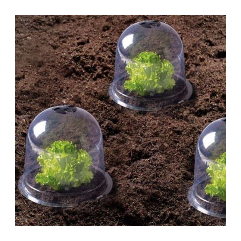 Cloche salades x6 serre de protection pour plants serres - Cloche en plastique transparent jardin ...
