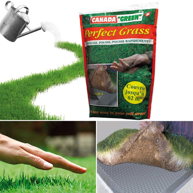 sac gazon rapide perfect grass canada green 1kg entretien pelouse. Black Bedroom Furniture Sets. Home Design Ideas