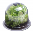 Cloche à salades x12 serre de protection pour plants